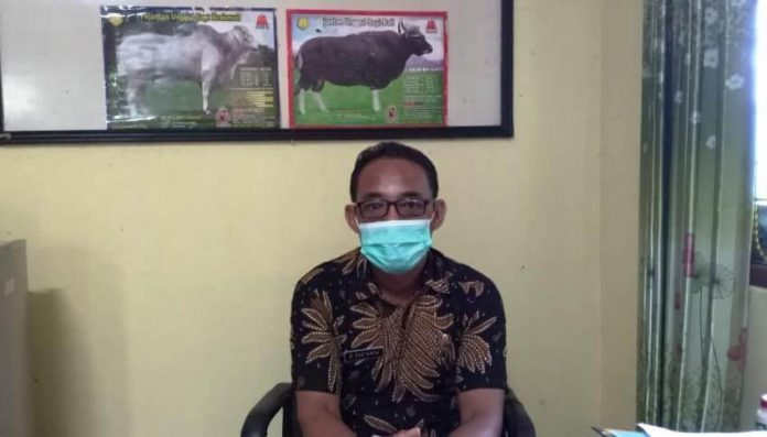 Kepala Bidang Peternakan Dinas Pertanian Tual Dominggus Kastanya mengatakan, jumlah bibit ternak kali ini lebih sedikit dari pada yang disalurkan tahun lalu. Hal ini disampaikan di ruang kerjanya, Kamis (14/1/2021). Foto: Ludweina Maturbongs