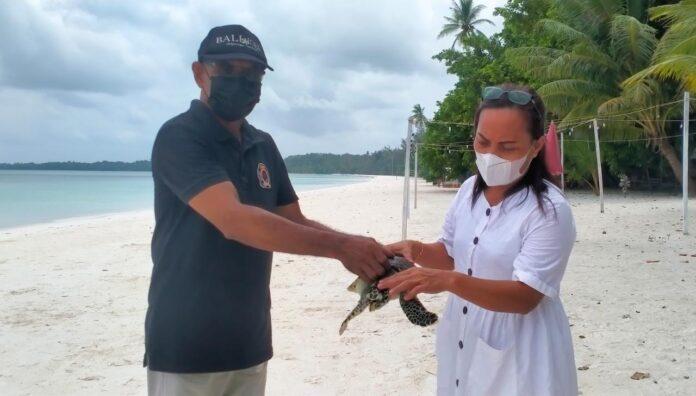 Kepala Resort KSDA Tual Yopi Jamlean menerima seekor penyu sisik dari warga setempat untuk dilepas-liarkan di Pantai Wisata Ngurbloat, Sabtu (18/9/2021). Foto: Labes Remetwa